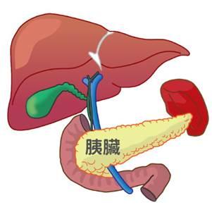 胰臟位置圖